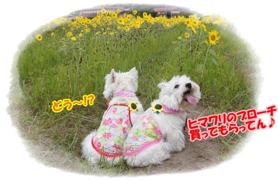 himawari6.jpg