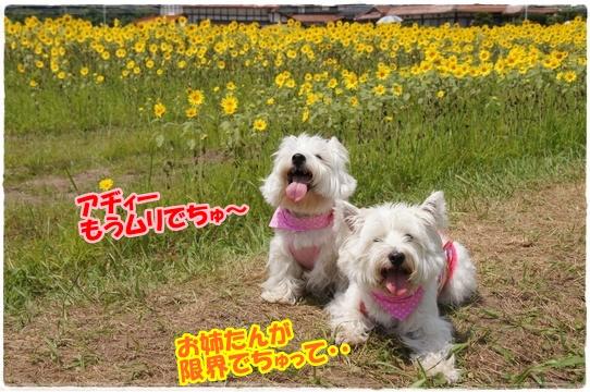 himawari7.jpg