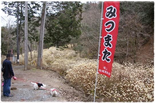 mitsumata1.jpg