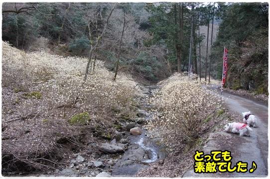 mitsumata14.jpg