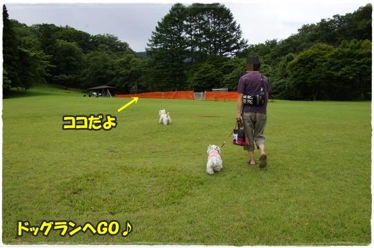 park5_20160727161826a1a.jpg