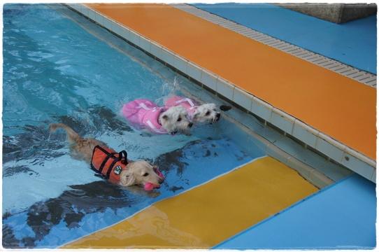pool10.jpg