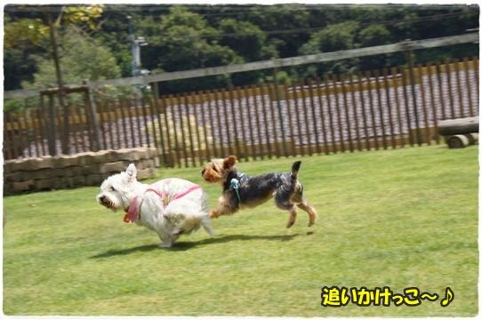 run12_2016082817594036c.jpg