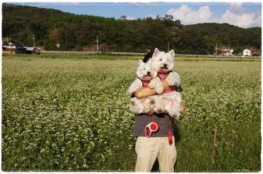 shirosoba4.jpg