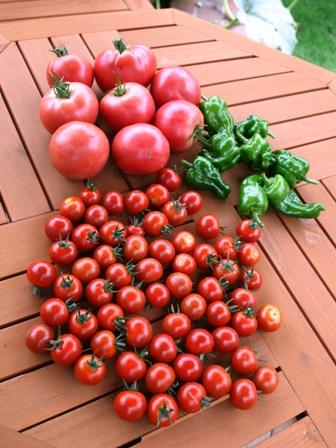 20160722トマト収穫