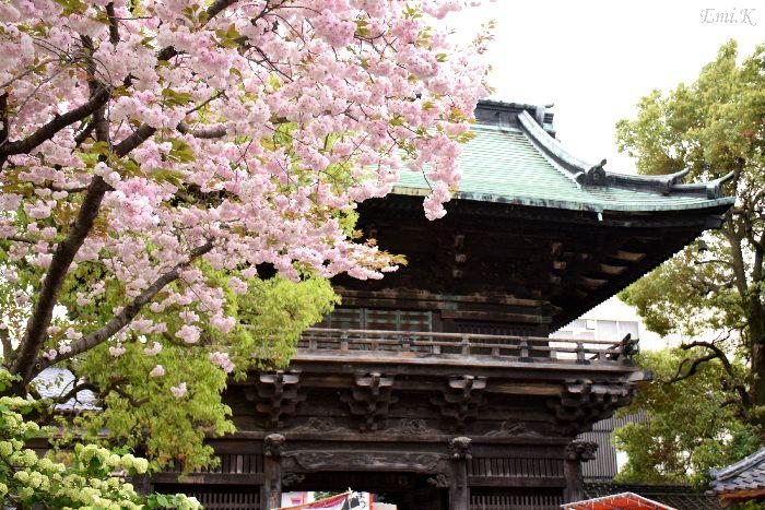 011-New-Emi-山門八重桜