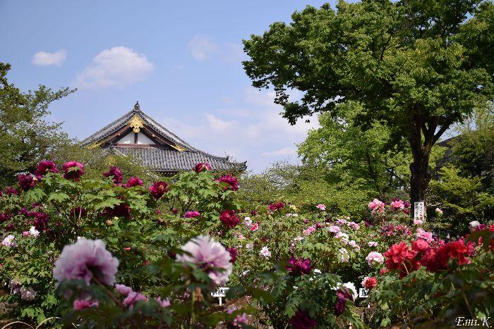 021-Emi-牡丹園