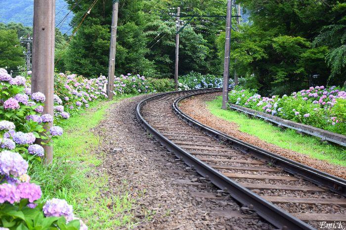 274-New-Emi-線路沿いの紫陽花