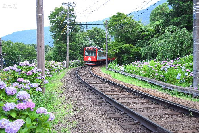 294-New-Emi-登山電車-紫陽花