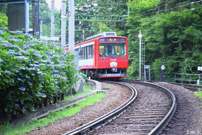 287-New-Emi-登山電車-紫陽花