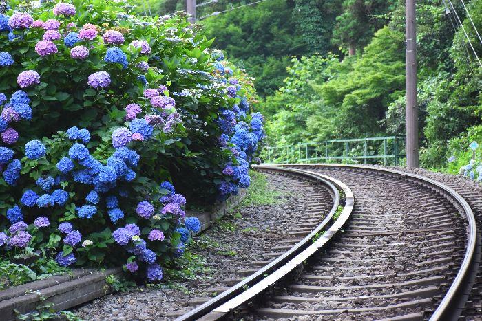 277-線路沿いの紫陽花