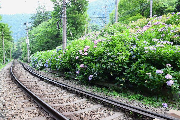 276-線路沿いの紫陽花