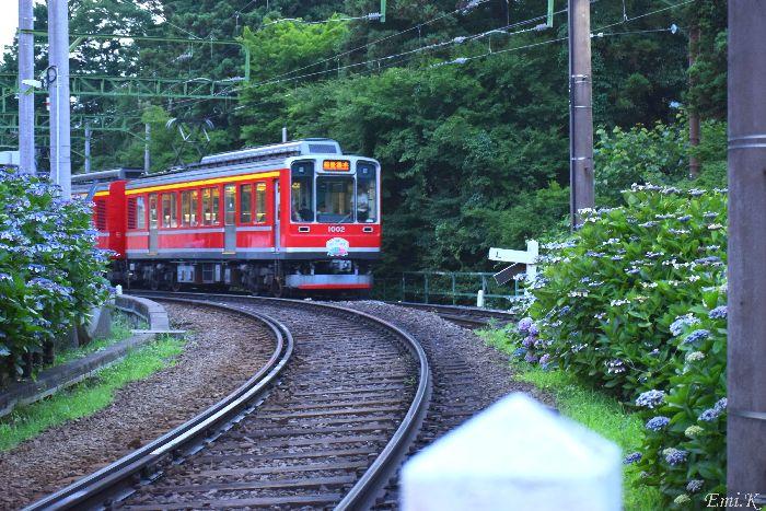 304-New-Emi-登山電車-紫陽花
