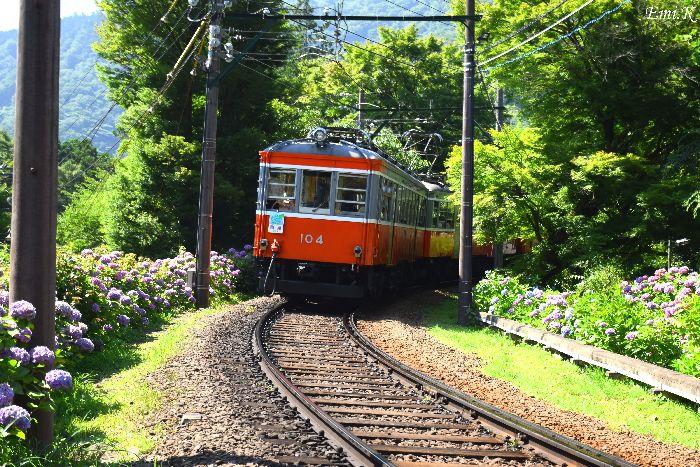 002-New-Emi-登山電車-紫陽花