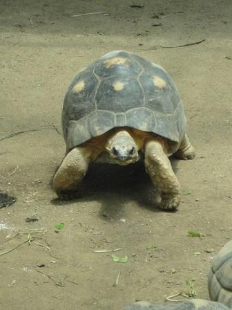 天王寺動物園①