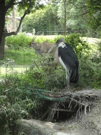 天王寺動物園⑪