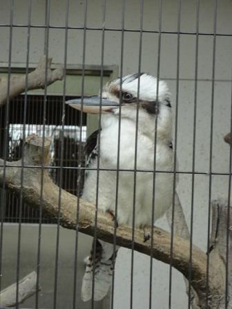 天王寺動物園⑰