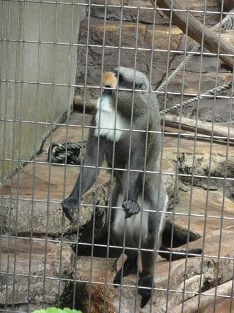 天王寺動物園⑮