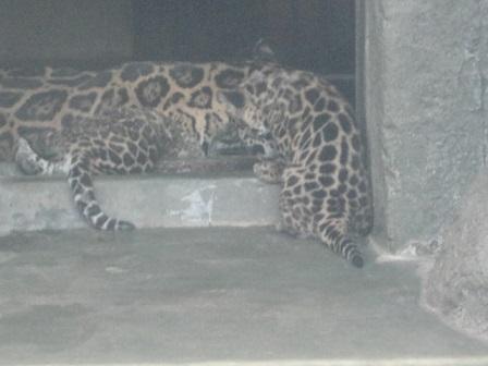 天王寺動物園⑬