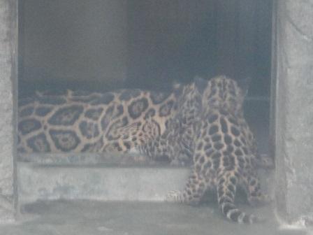 天王寺動物園⑫