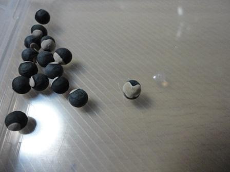 フウセンカヅラの種子②