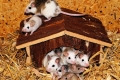 2357403282-mouse-family-443297_1920-wpMz-480x320-MM-100.jpg