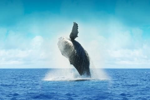 2725206537-whale-605918_1920-GZAy-480x320-MM-100.jpg