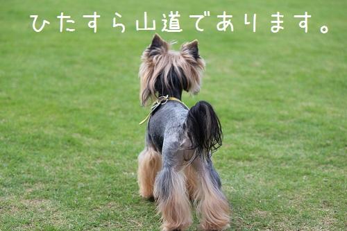 IMG_0291 - コピー