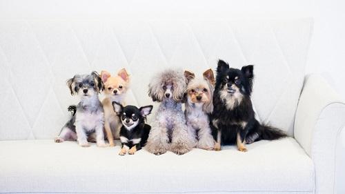 dogs-42_20160522204903cd1.jpg