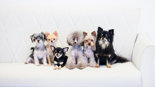 dogs-42_20161017203335a15.jpg