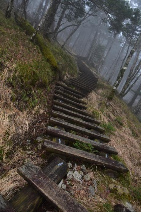 2木道を登る