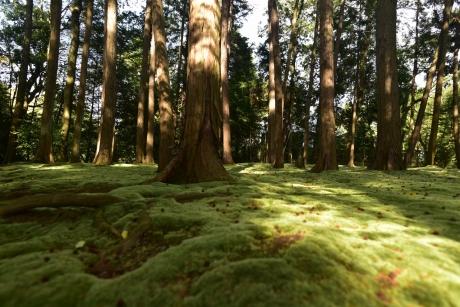 24苔の絨毯