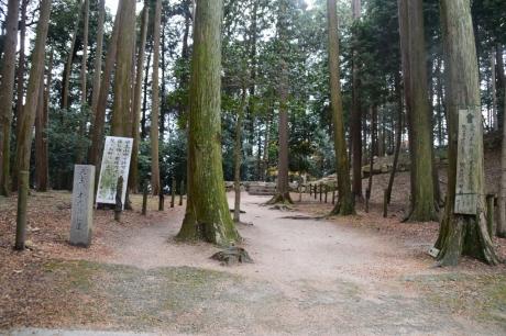 11森の中を進む
