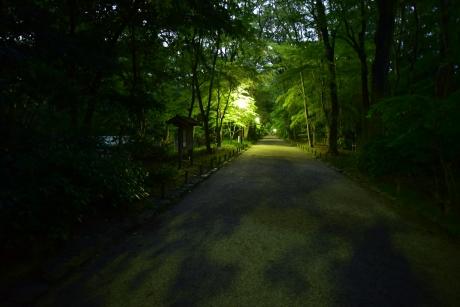 28糺の森