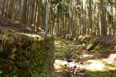 6旧道を登る
