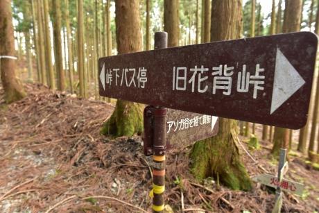 8ハイキングコース