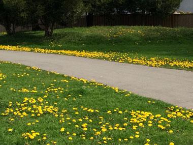 spring-flowers_3.jpg