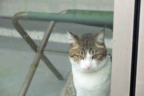 02猫のいるギャラリー