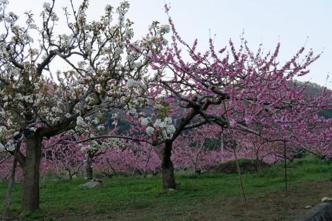 31果樹園