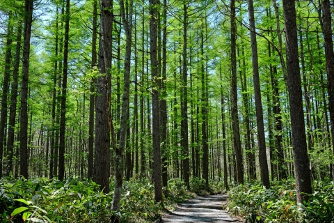 20戸隠カラマツ林