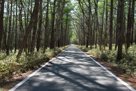 34小田代ヶ原への林道