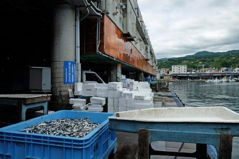 05小田原漁港
