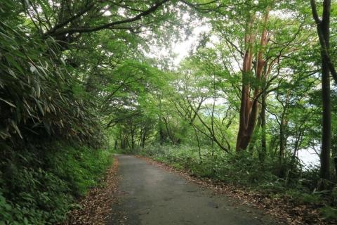 17芦ノ湖畔の道