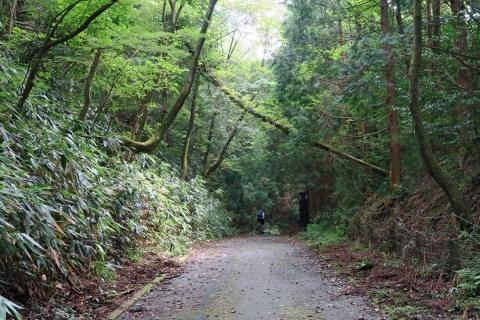 18芦ノ湖畔の道