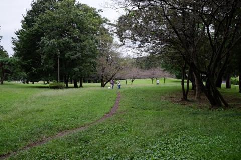 13野川公園