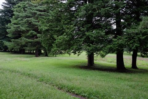 15野川公園