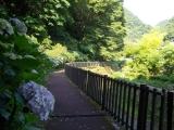 洒水の滝への遊歩道(7:36)