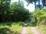 森の中のハイキングルート
