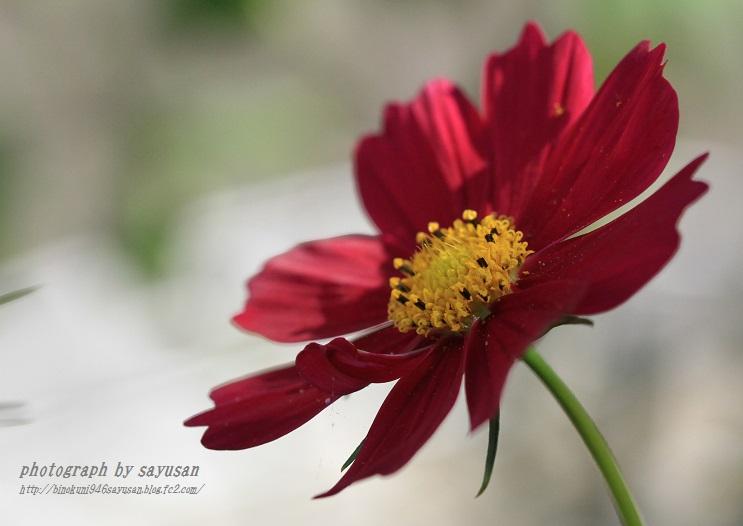 IMG_6609-A-1.jpg