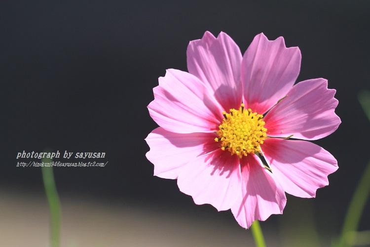 IMG_6618-A-4.jpg